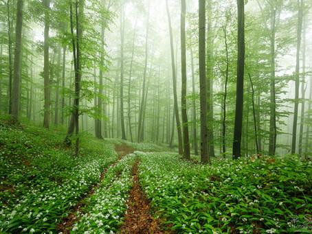 Im weißen Wald