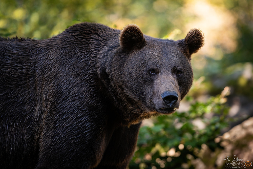 Tierfreigehege Bayerischer Wald