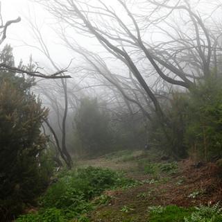 La Gomera Nebelwald