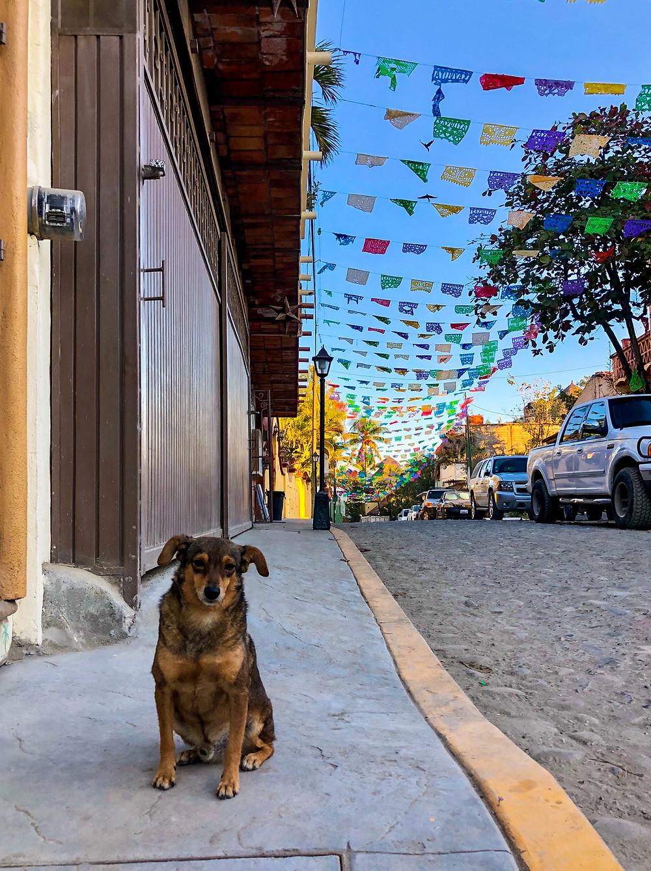 Sayulita mexico sad dog downtown street