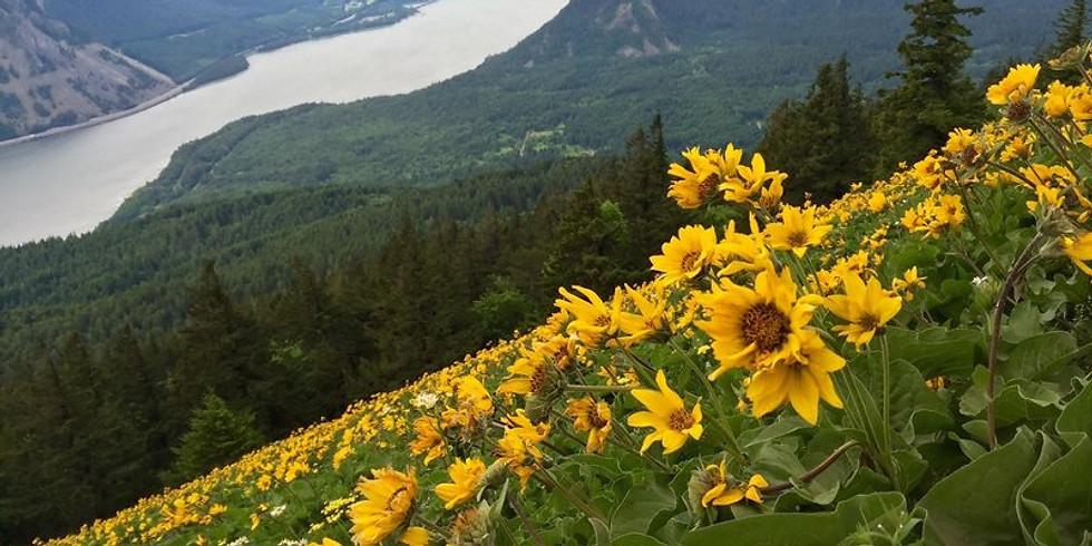 Ladies Out   Dog Mountain