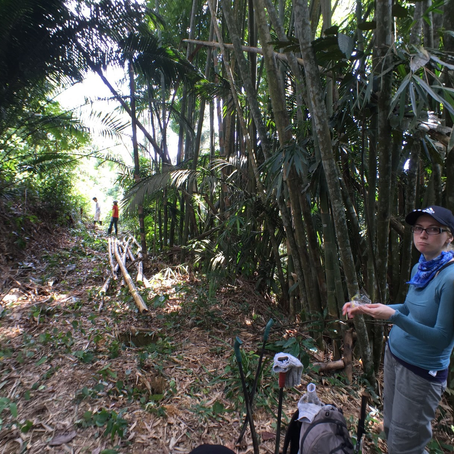Land exploration and clearing works - October, 2015