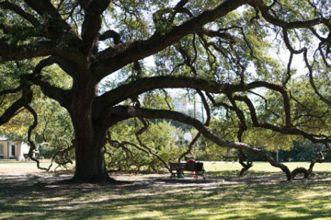 River_Oaks_River_Oaks_Park-1.jpg