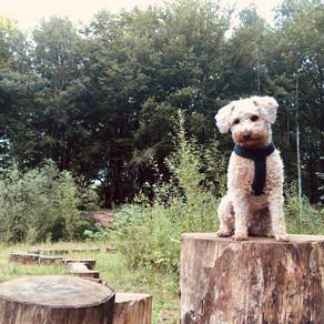 Dog Parkour - qu'est-ce que c'est ?