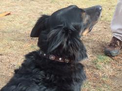 Handmade leather dog buckle collar