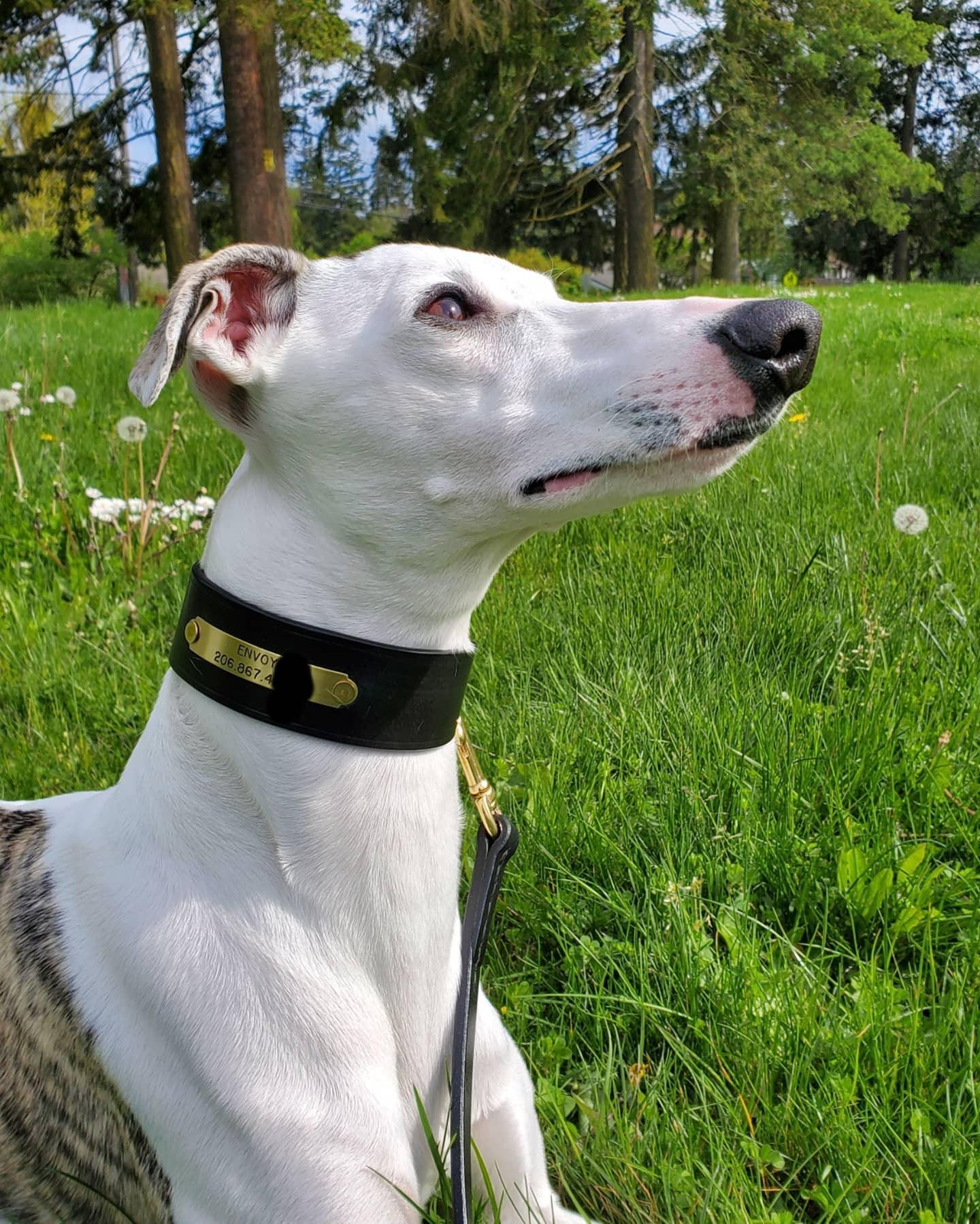 Black Sighthound Collar and Leash