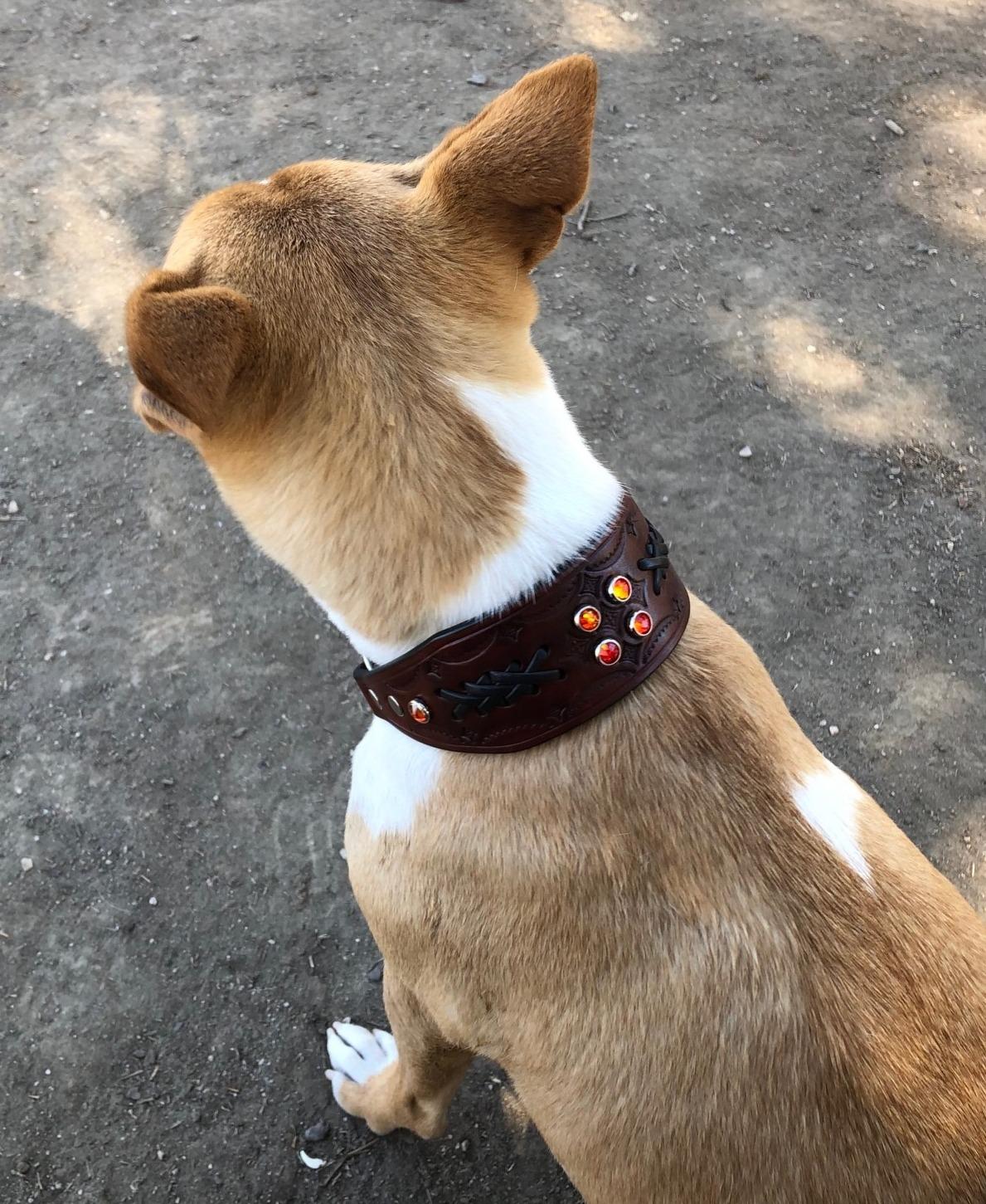 Basenji leather chain martingale collar