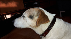 Tooled leather martingale collar