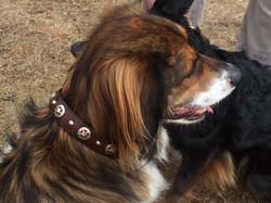 Decorative, concho leather collar
