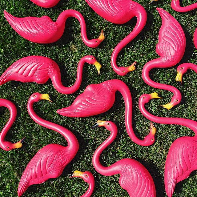💃🏼Let's Flamingle!💃🏼 Our flock of original #donfeatherstone pink #flamingos is here and ready to