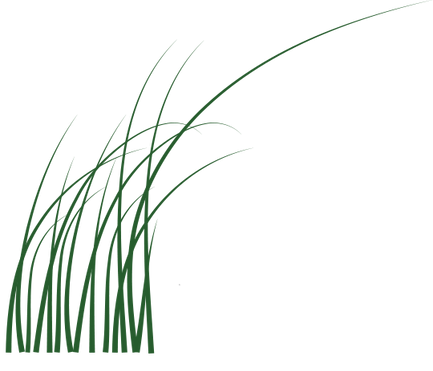 Meadows Edge grass.png