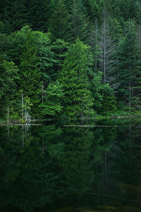 Green Nature_edited.jpg