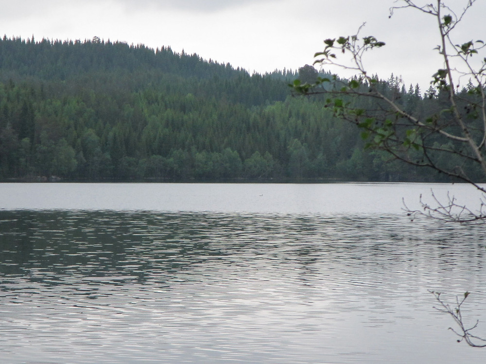 Picture of a lake in Norway with a forested hill behind it.  There is a tiny dot on the lake that is likely a Red-throated Loon.