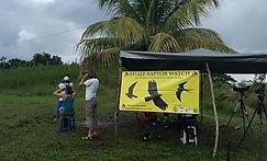 Belize Raptor Watch by Alyssa DuRubeis