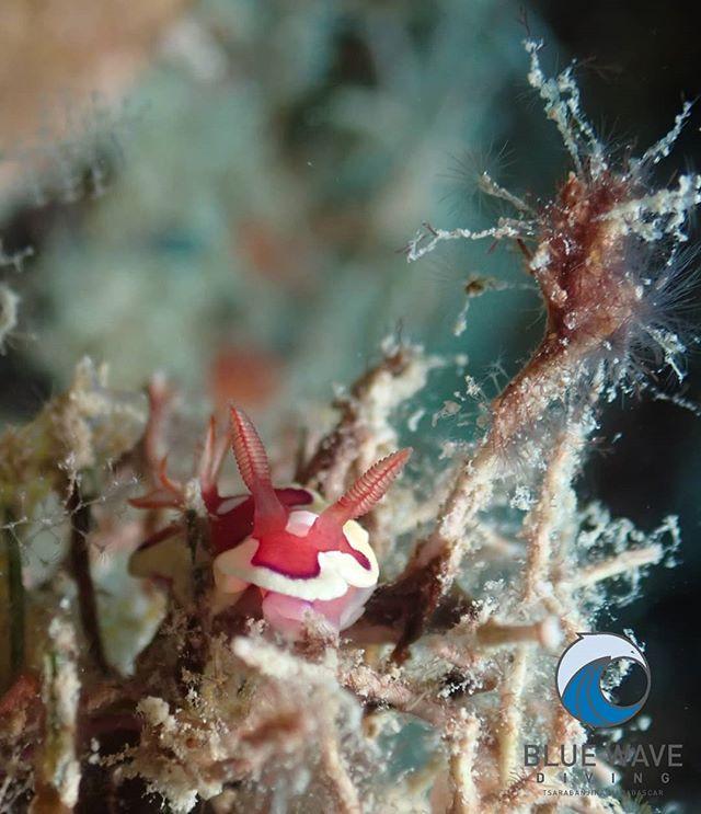 Tiny treasure ✨🌊 - Mexichromis pusilla