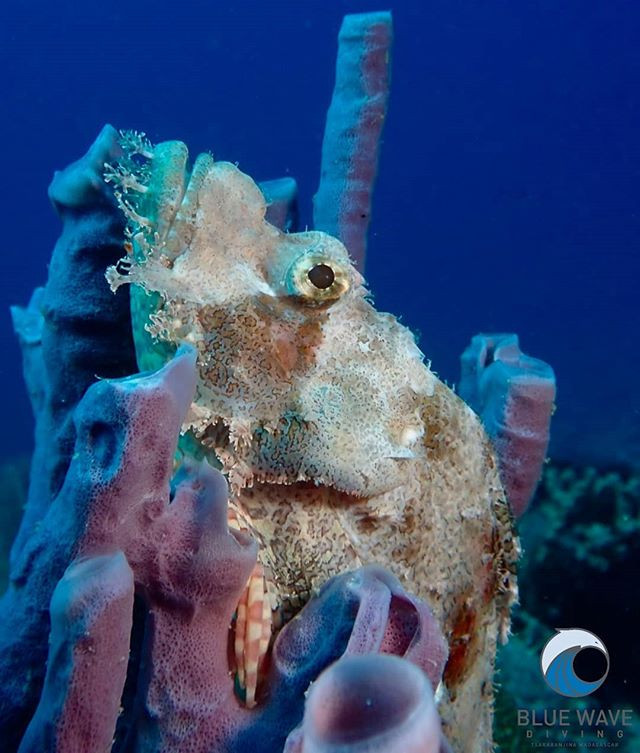 Do you know that some scorpionfish are b