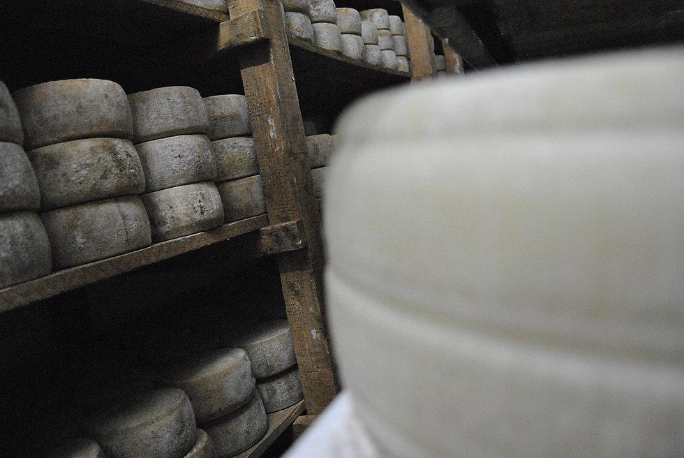 Käse besten Sardinien Pecorino