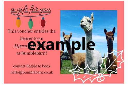 Christmas Alpaca Meet & Greet with MINI WALK Voucher