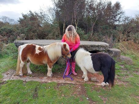 Pony Experiences @ Bumblebarn!