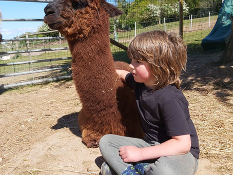 Alpacas & Therapy