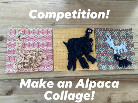 Alpaca Collage Competition!
