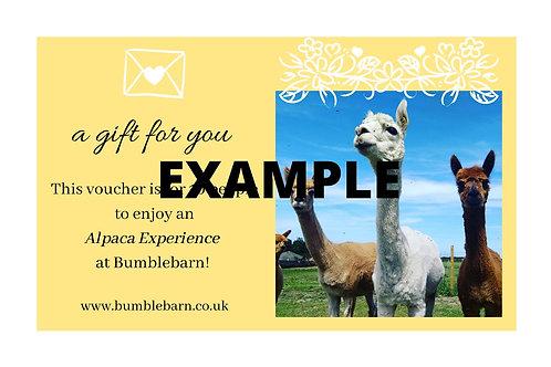 Alpaca Meet & Greet with MINI WALK Voucher