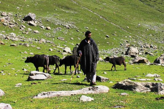 Shepherds Still Worship Him