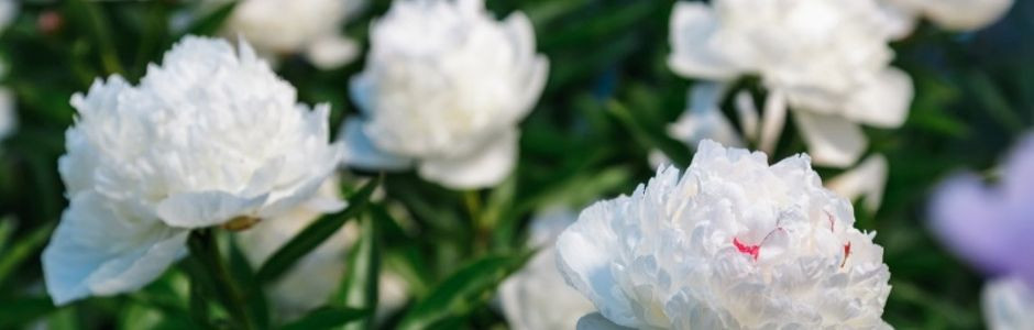 Anniversario Di Matrimonio Galateo.Bouquet Fiori Anniversario Matrimonio