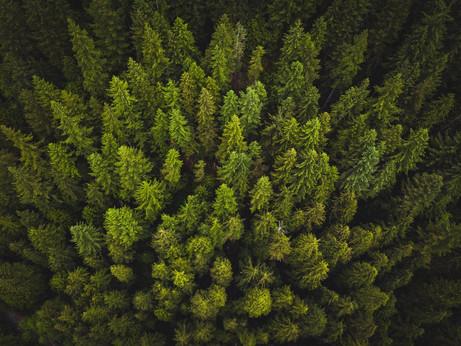 SOSTENIBILITA' – 1000 alberi in 100 giorni e le altre azioni green di Confartigianato Lombardia