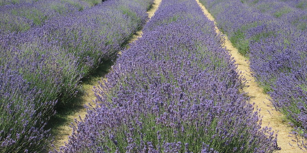 July Introductory Ride, the lavender edition