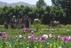 Mohndorf Nordafghanistan