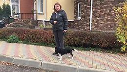 Как научить собаку не выходить на дорогу?