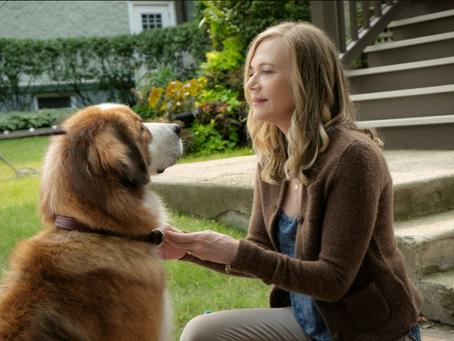 Фильм «Собачья жизнь»