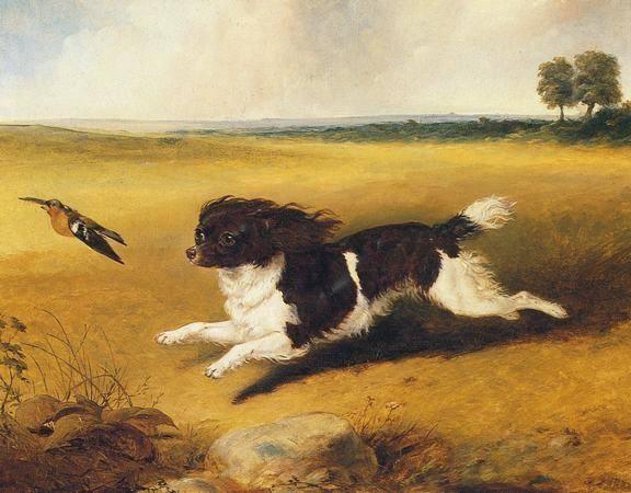 Кавалер в поле