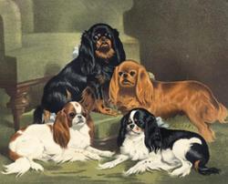 Four King Charles Spaniels