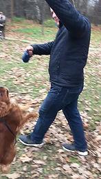 Как отучить собаку бояться громких звуков