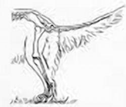 Неправильные углы задних