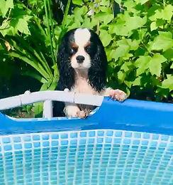 Умение плавать у собак врожденное?!