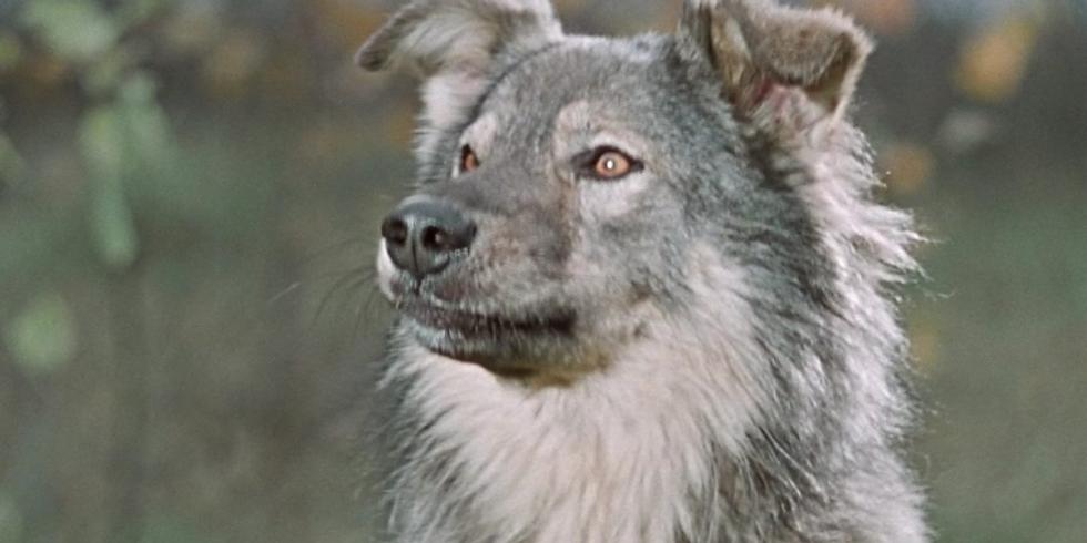 Лекция Юлии Соколовой. Злая собака: миф и реальность. Собака агрессивна к людям. Как с этим бороться?