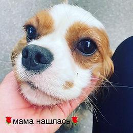 Почему собака может потеряться?