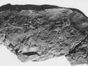 El alfabeto más antiguo del mundo