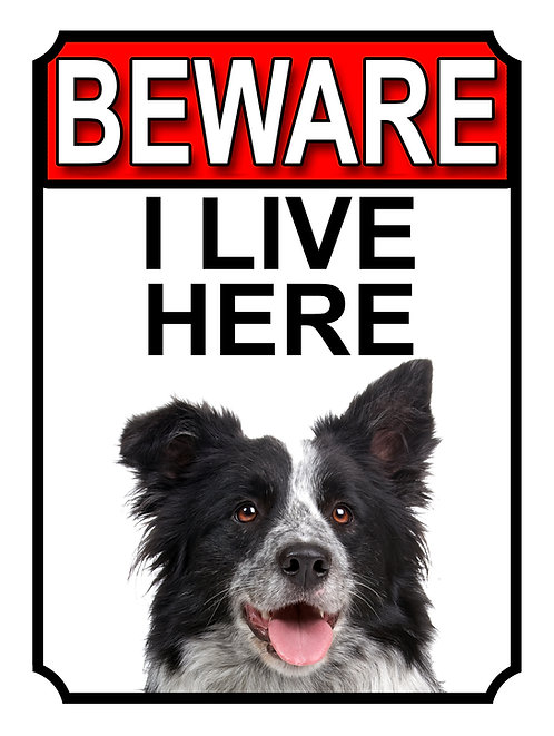 Border Collie Beware I Live Here Dog Breed  Garden Yard Gate Sign 1045H1