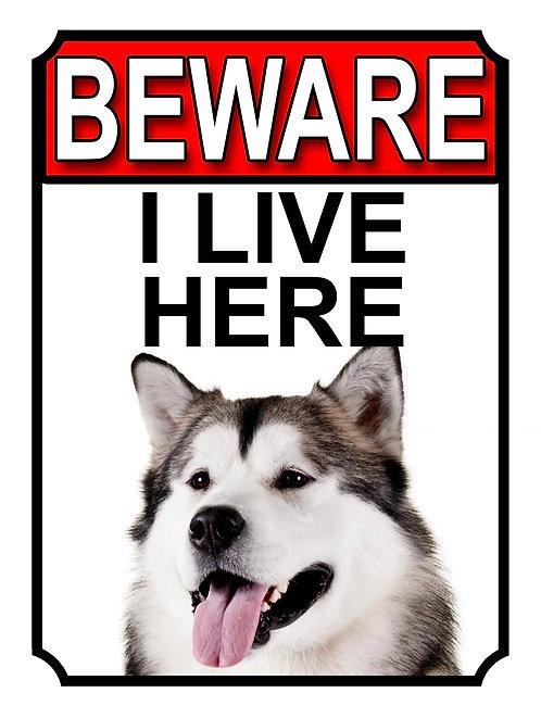 Alaskan Malamute Beware I Live Here Dog Breed  Garden Yard Gate Sign 1033H1