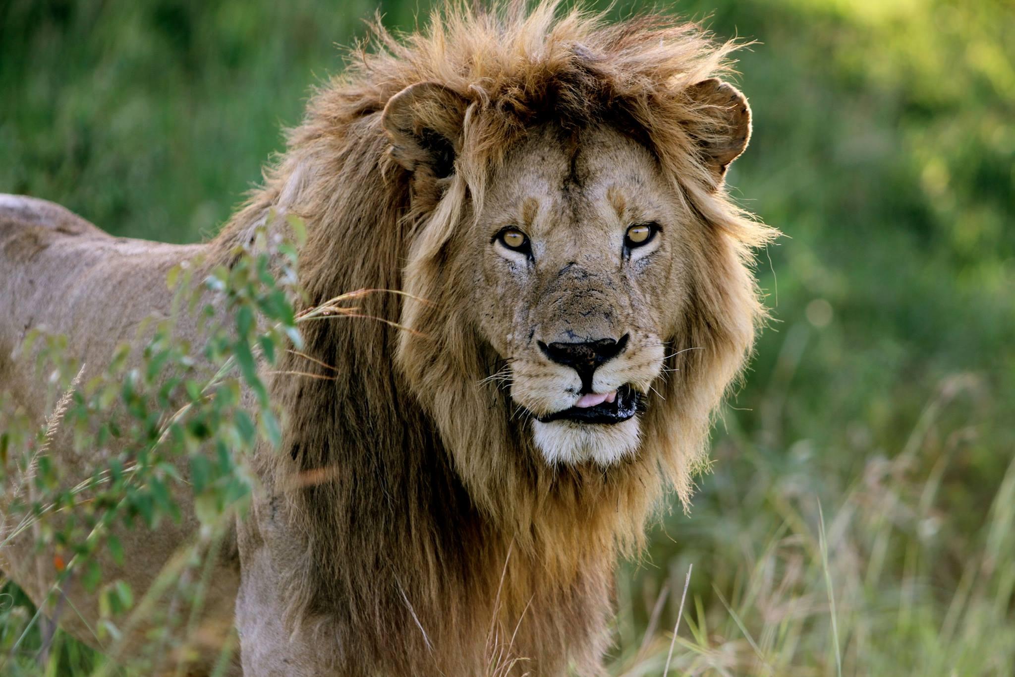Photo Club - Africa - the Serengeti