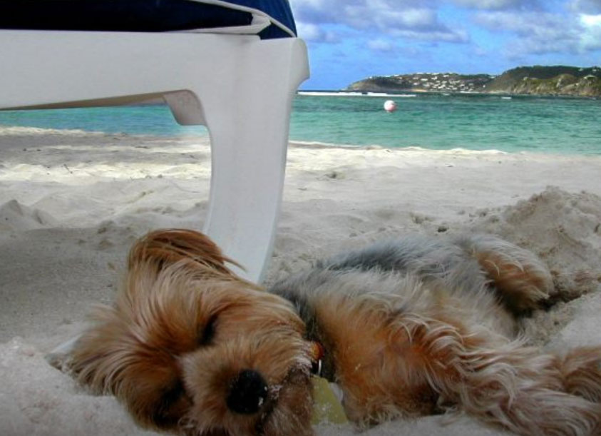 Long day at Lovers Key Doggie Beach