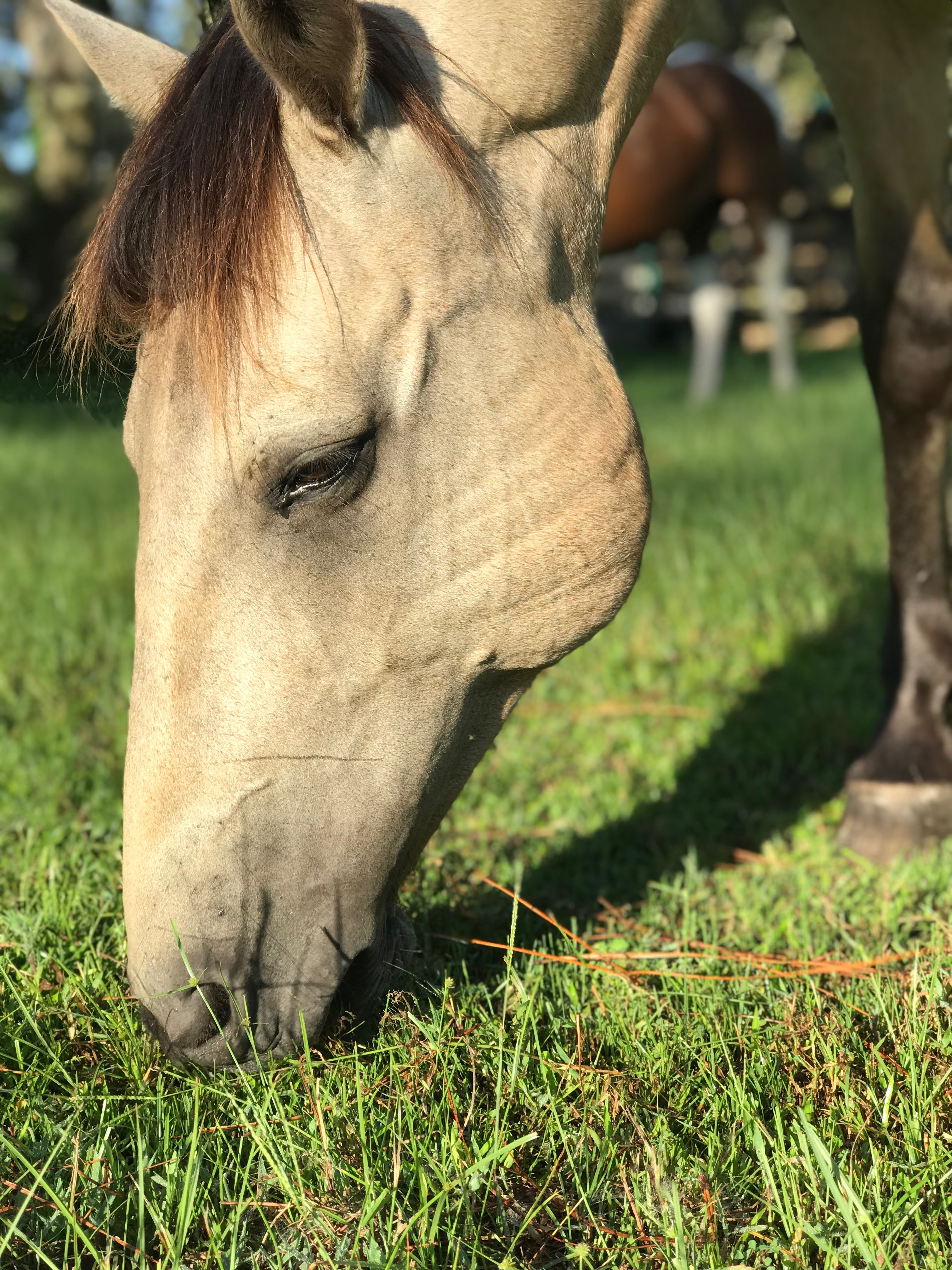 Horse Sitting | Gallery