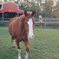 Skylar | Horse Sitting | Gallery