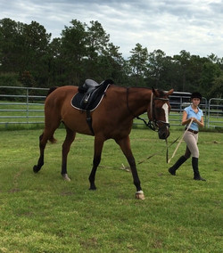 Horse Exercise |Gallery