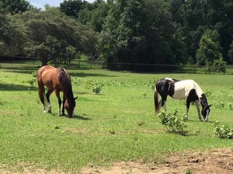 Gemma & Daisy | Horse Sitting