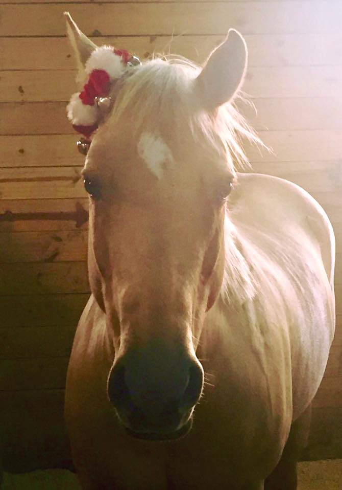 Bella's Christmas Photo | Gallery